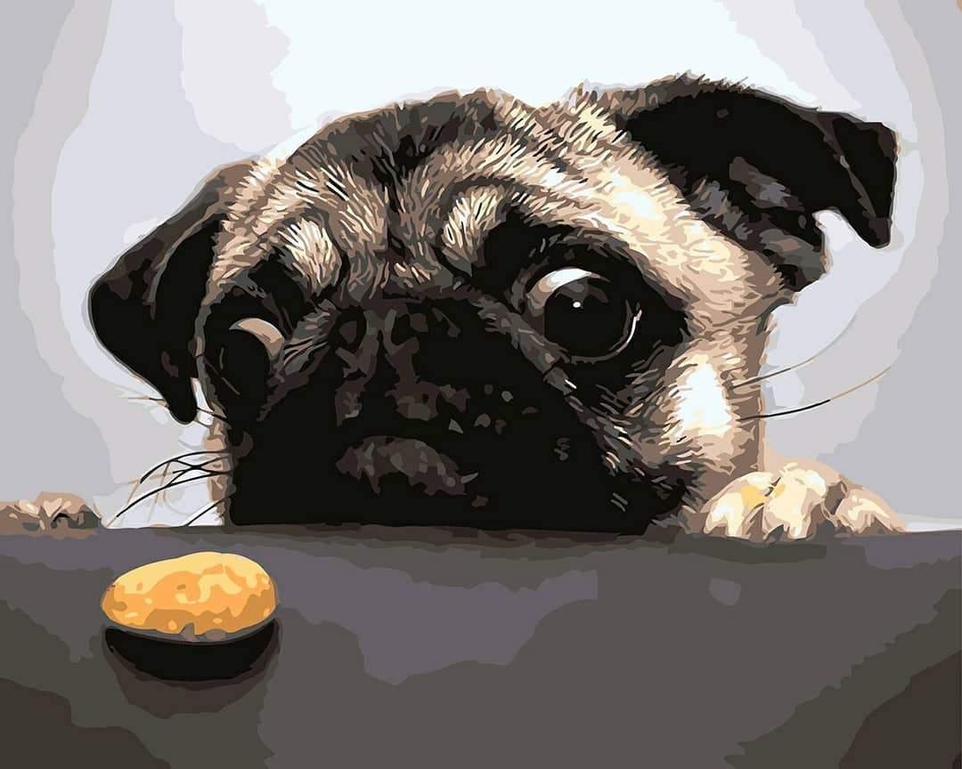 צביעה לפי מספרים - פאג רוצה עוגייה