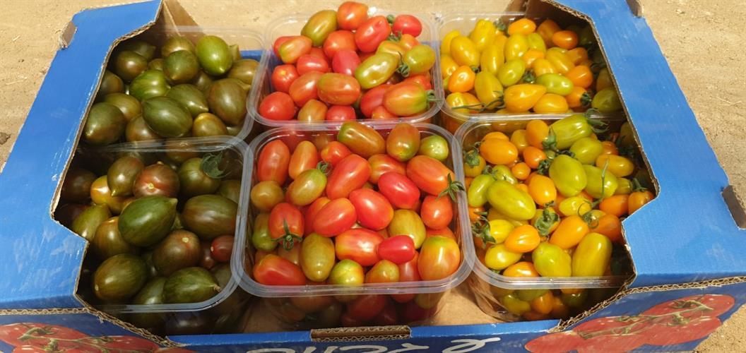 עגבניה שרי מעורבב אורגני - ארגז 8 ק''ג מינימום