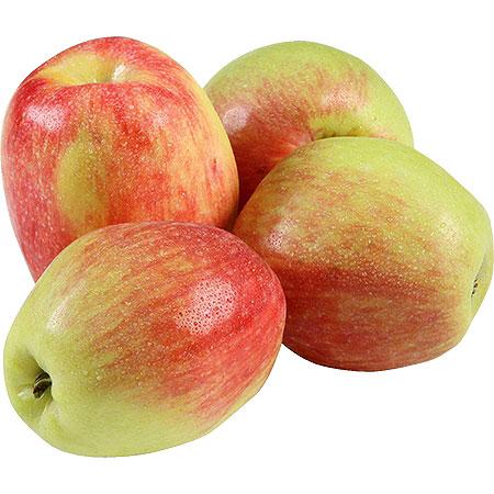 תפוח עץ ענה