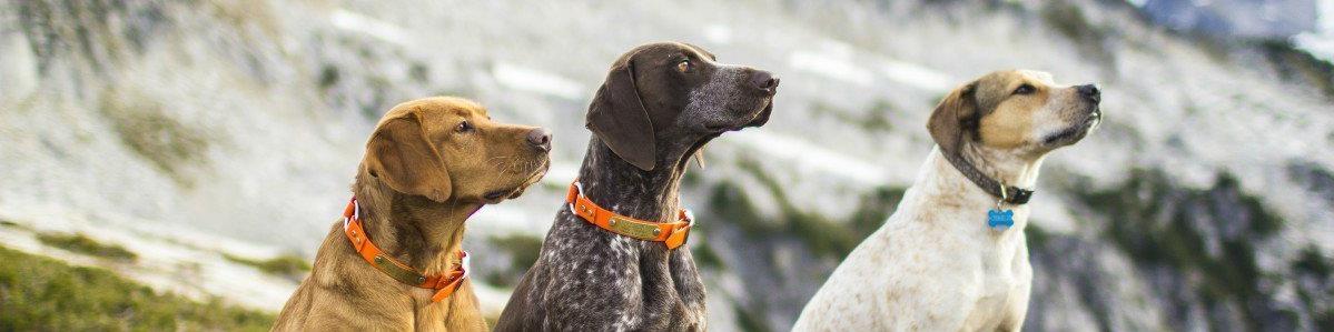 מזונות כלבים לפי מותג - המחסן - מוצרים לבעלי חיים