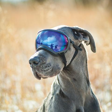 משקפת REX SPECS לכלב