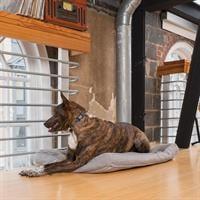 קולר נגד נביחות נטען לכלב גדול פט סייף