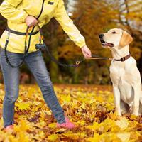 רצועה לכלב המתחברת לחגורה