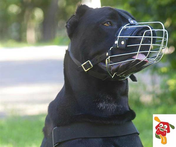 מחסום לכלב מתכת ועור לכלב עם אף פחוס (פיטבול,בולדוג וכו') מידה - 8
