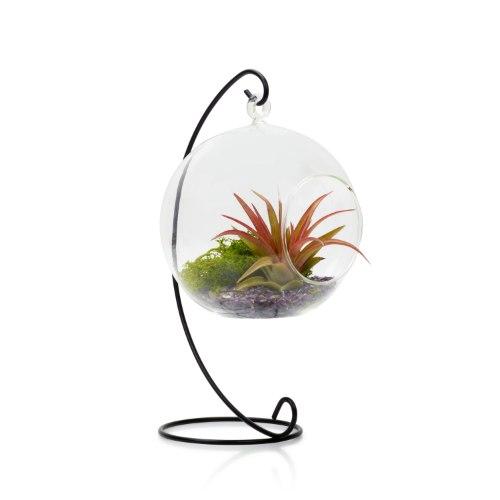 מובייל זכוכית + סטנד מתכת וצמח אויר (גודל לבחירה)