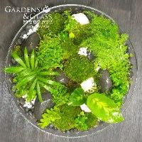 עוגת צמחים