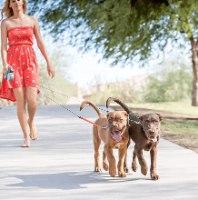 רצועה כפולה ל2 כלבים- לטיול מושלם