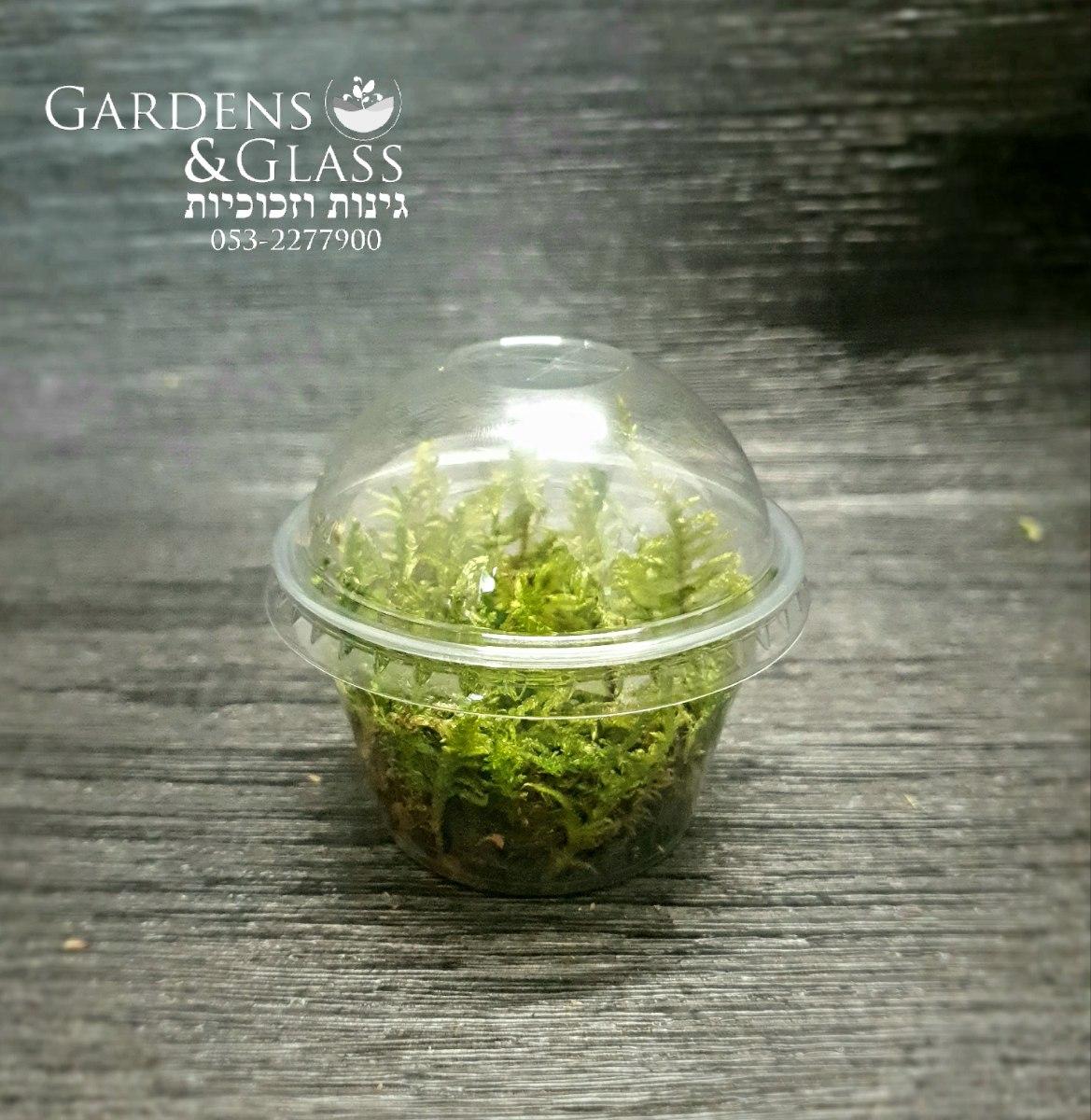 מוס דשא כוס חצי