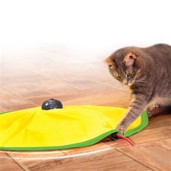 קט קרייזי משחק מסתובב לחתול
