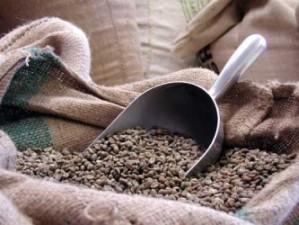 קפה ירוק גולדן ג'אוה - Indonesia Java robusta scr. 19 + Golden Java