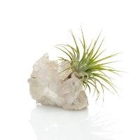 אבן הבריאות  קוורץ  וצמח אויר