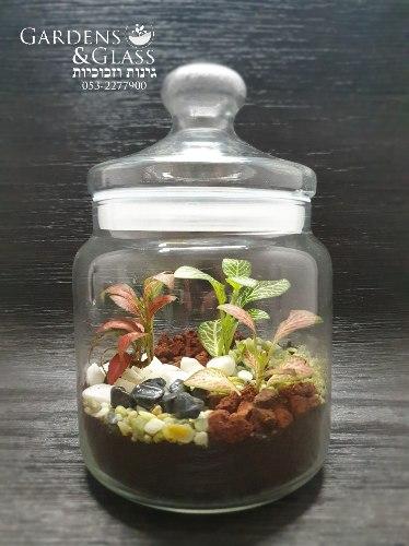 טרריום צמחים גודל 5