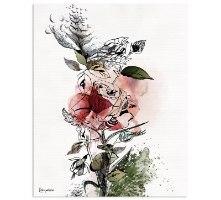 תמונה של ורד אדום שושנה