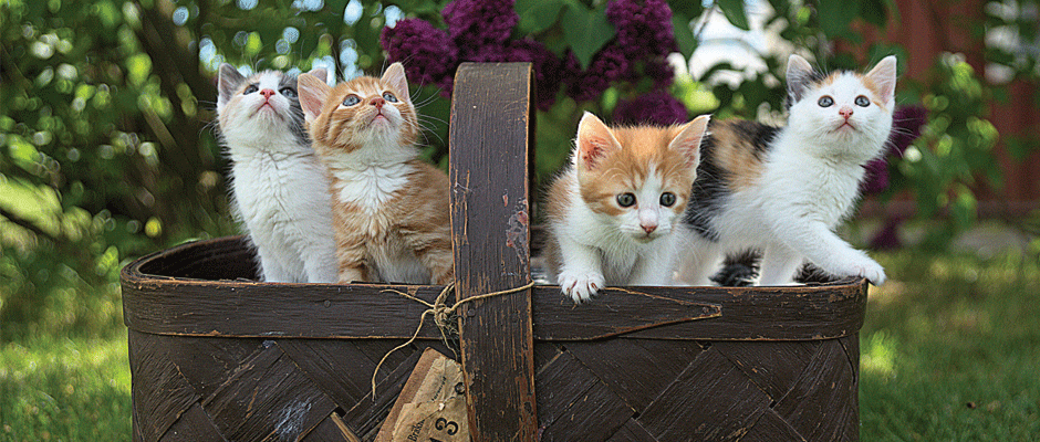 ציוד ומזון לחתולים - המחסן של חיים