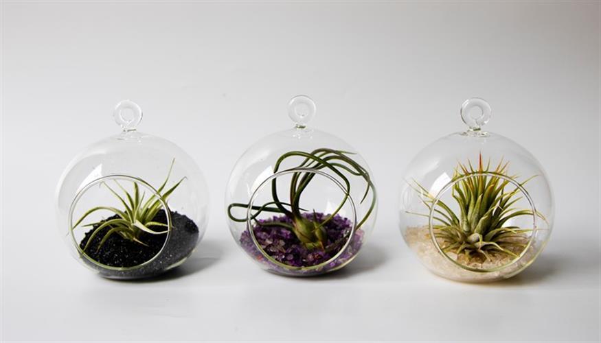 """קומבינציית 3 מוביילים 10 ס""""מ וצמחים +שפריצר מתנה"""
