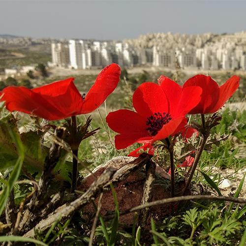 טבע עירוני בישראל |יום ו׳, 24.08.18 בשעה 10:00 | מרצה: יערה ישראלי