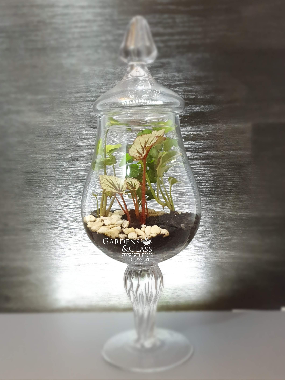 טרריום צמחים מעוצב