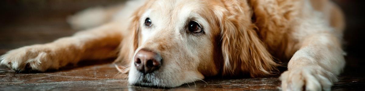 מזון לכלבים מבוגרים - המחסן - מוצרים לבעלי חיים