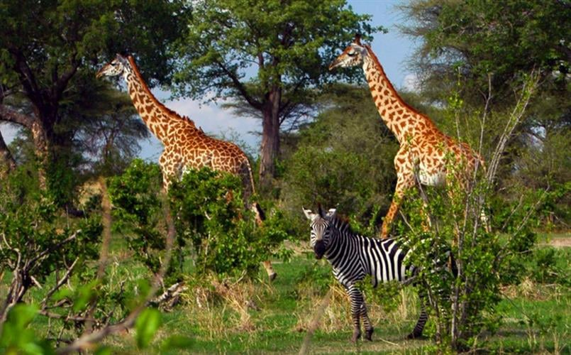 טיול ספארי באוגנדה - הפנינה של אפריקה, 10 ימים