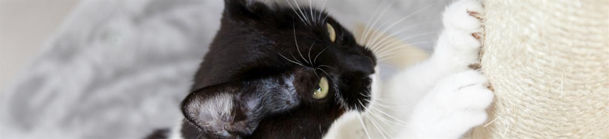 מגרדות ומתקני גירוד לחתולים - המחסן - מוצרים לבעלי חיים