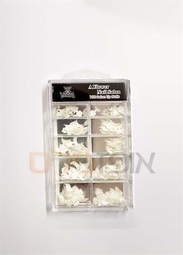 קופסא ציפורניים לפראנץ  (100 יחידות)