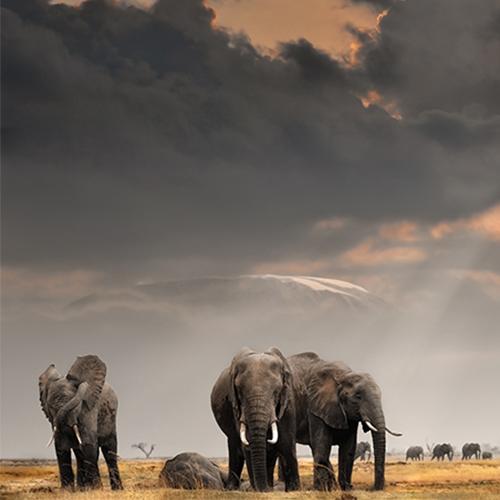 קניה - ספארי על קו המשווה | יום ה׳, 17.5 בשעה 19:00 | מרצה: רונה שולמן