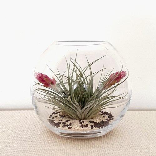 אקווריום צמחים