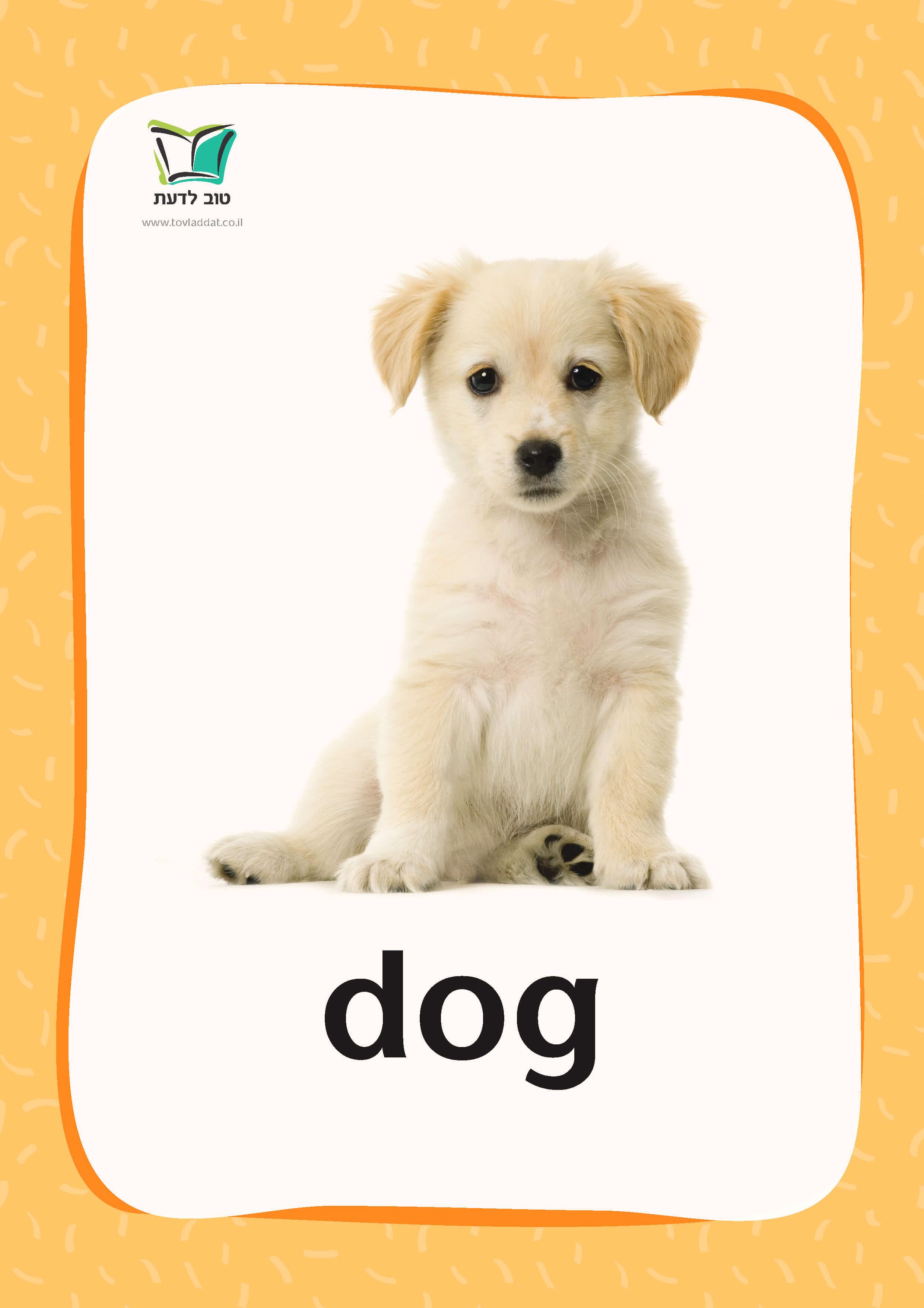 *פריט עודפים* קטגוריה – חיות חוה | Household Pets