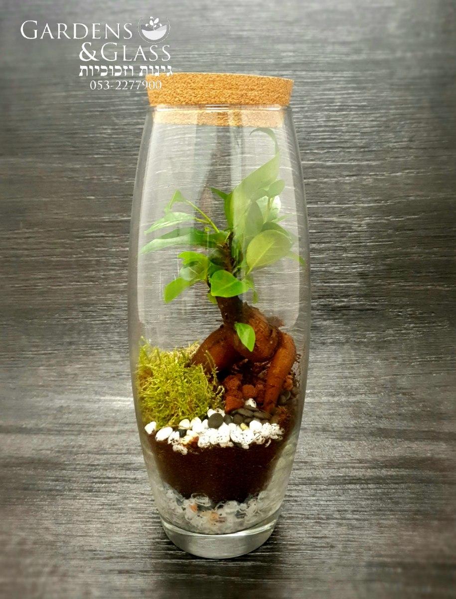 טרריום עץ