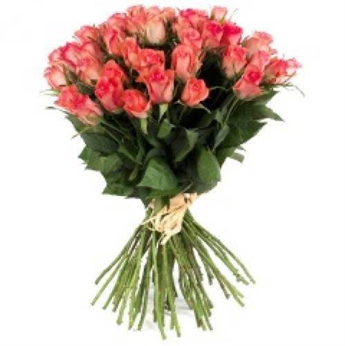 רק ורדים-מקט 61