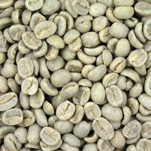 קפה ירוק הודי שטוף - Indian Robusta Parchment A