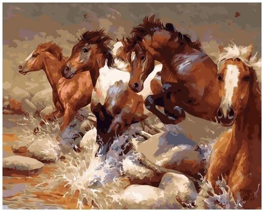 צביעה לפי מספרים - סוסי בר