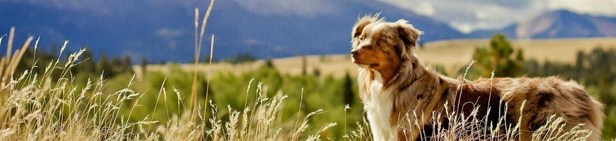 מזון טבעי לכלבים - המחסן - מוצרים לבעלי חיים