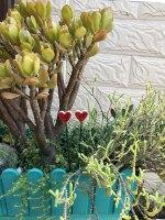 לב גדול על מקל לעיצוב עציץ