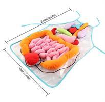 סינר אנטומיה ללימוד איברי הגוף