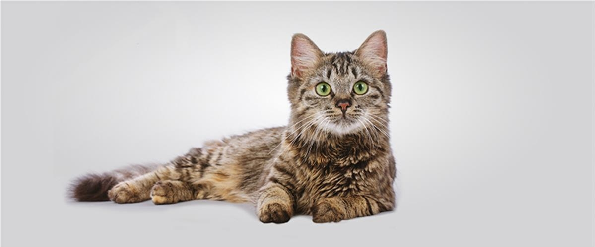 advance cat - יוגי-בר