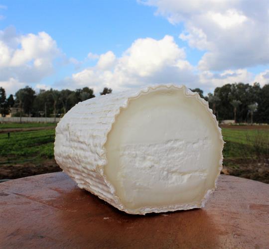 גבינה בסגנון בושה