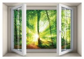 חלון בנישה הזריחה ביער הקסום