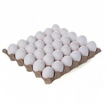 תבנית ביצים 30 יחידות XL