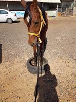 NLP + מוח אחד + אימון באמצעות סוסים - עומר אזולאי