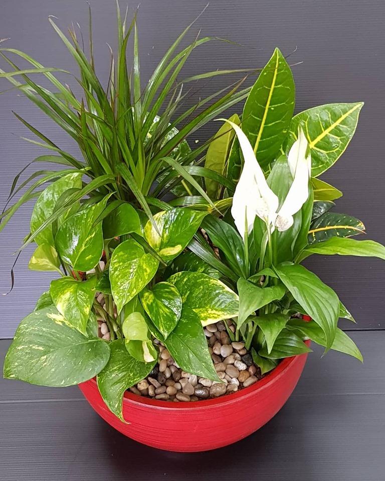 קוקטייל של 4 צמחים , בכלי קרמיקה מקט 0106