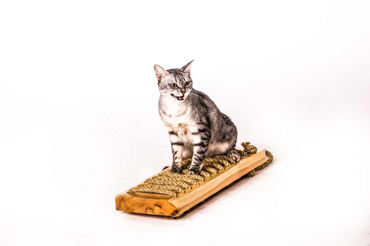 מדף גירוד לחתול - דו צדדי