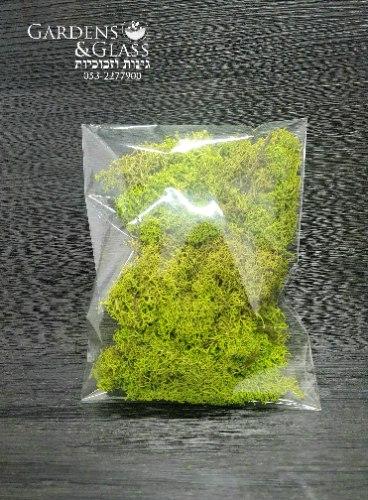 מוס ליצירה ירוק בהיר