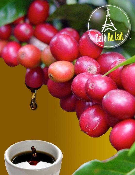 קפה ירוק אתיופיה יירגשף - Ethiopia Yigacheffe