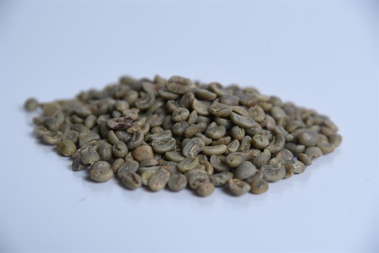 פולי קפה ירוק קולומביה