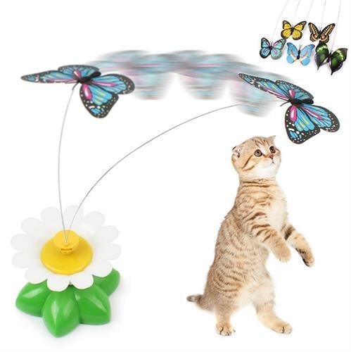 משחק תופסת פרפר לחתול