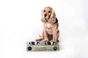כלי אוכל ושתיה לכלב - ג'קסון M