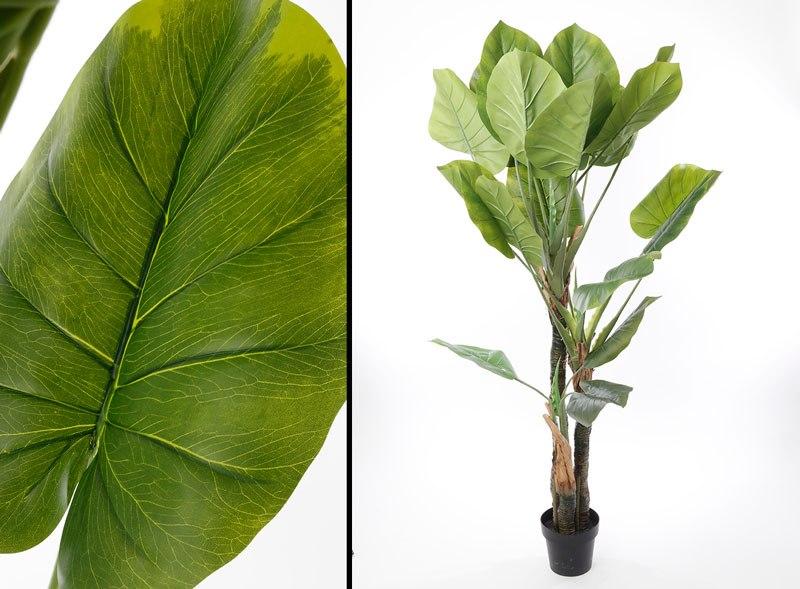 עץ עלי קאלה מלאכותי    מידות:180cm