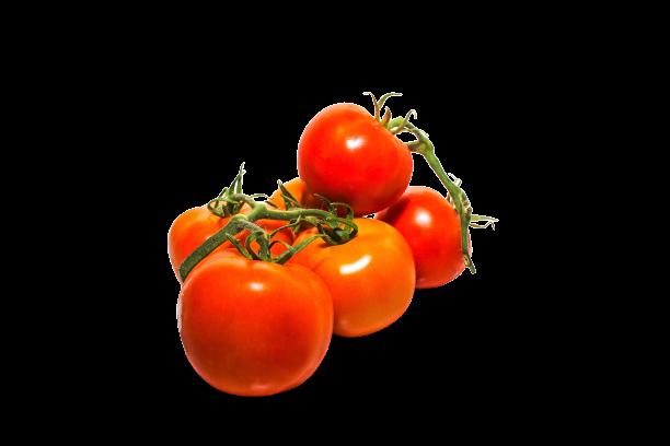 עגבנייה איכרם אשכולות
