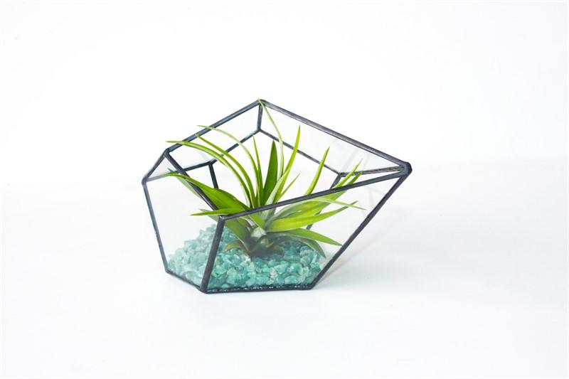 טרריום זכוכית - טיפה צבע שחור וצמח אוויר